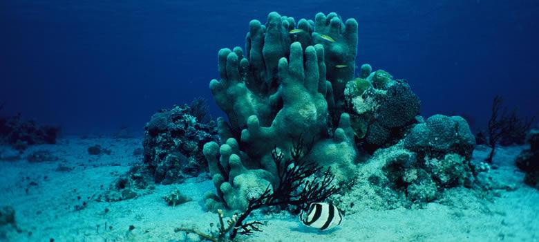 Chinchorro Reef, Costa Maya