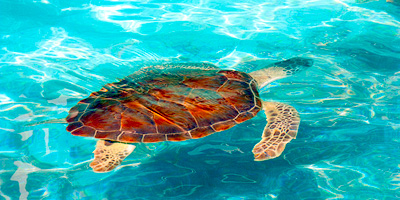 Turtle Farm, Points of interest in Isla Mujeres