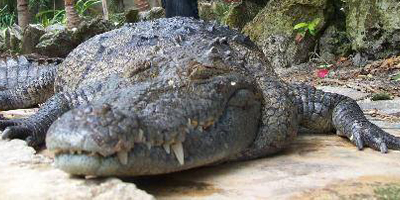 Crococun Zoo, Points of interest in Riviera Maya